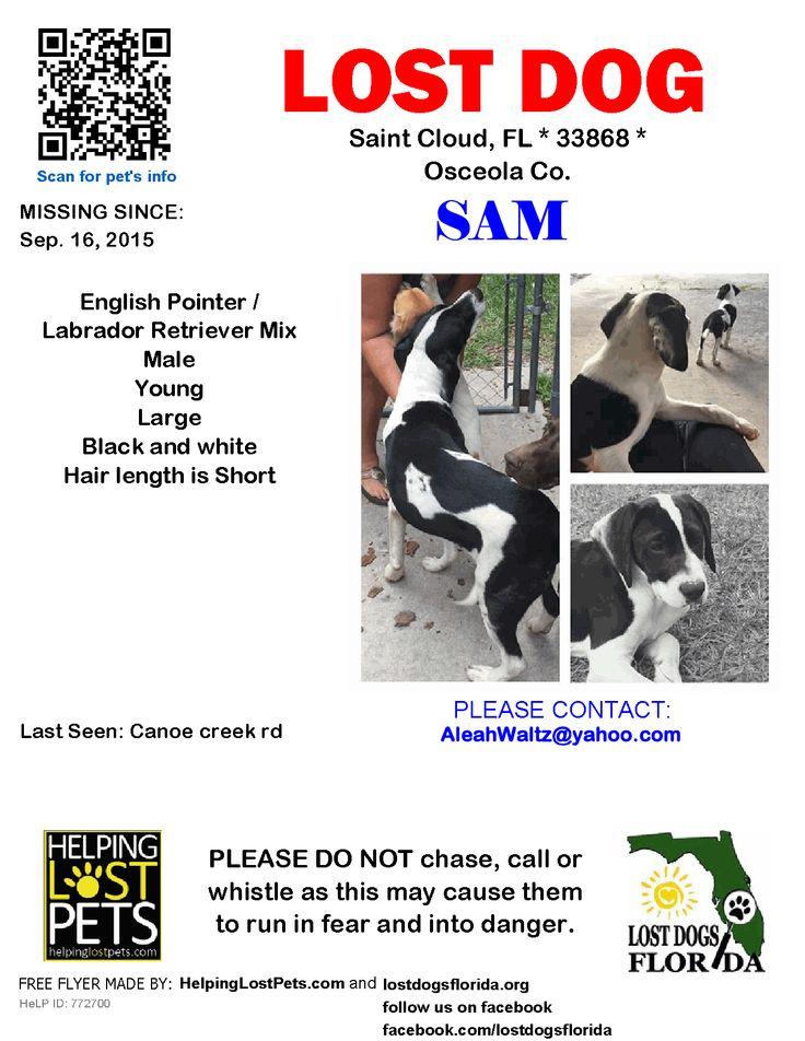 Lost Dog English Pointer Saint Cloud, FL, United