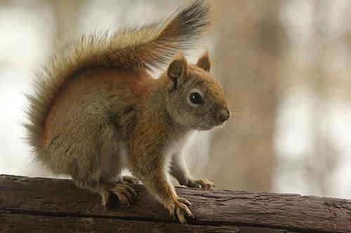 There was a red squirrel doing yoga poses in France. | The 11 Biggest Stories You Missed During The Big Game