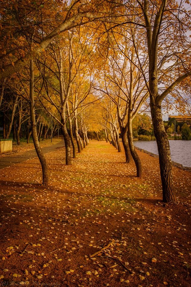 Autumn in #Canberra http://www.travelmagma.com/australia/things-to-do-in-canberra