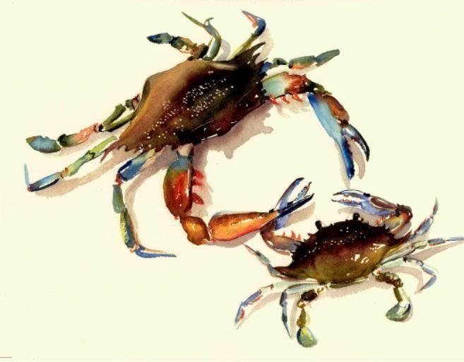 Big Bully Blue Crab Watercolor Art Print by Barry Singer 8X10 Beach Decor. $18.00, via Etsy.