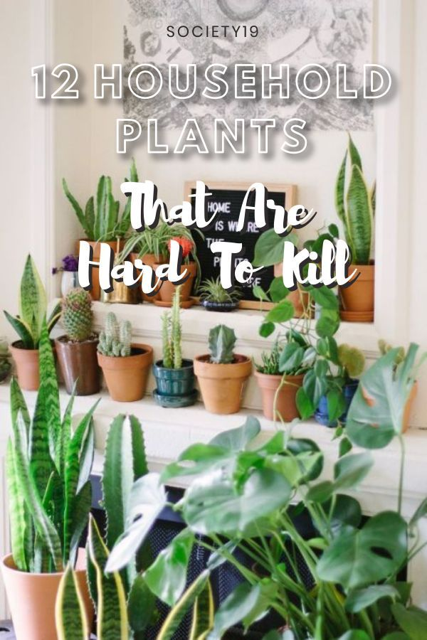 12 Household Plants That Are Hard To Kill Society19 In 2020 Household Plants Cheap Home Decor Plants