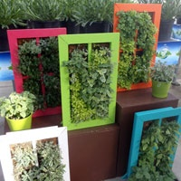 www.calloways.comPrivacy Wall, California Spring, Glasses Block, Glass Blocks, Gardens Inspiration, Glasses Privacy, Patios Parties, Spring Pack, Pack Trials