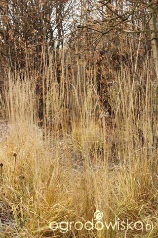 Ogród tworzę nowoczesny czyli wewnętrzna walka jak nie zostać kokoszką :) - strona 2133 - Forum ogrodnicze - Ogrodowisko