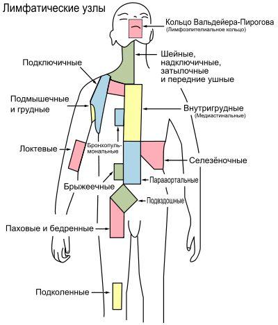 Группы лимфатических узлов.