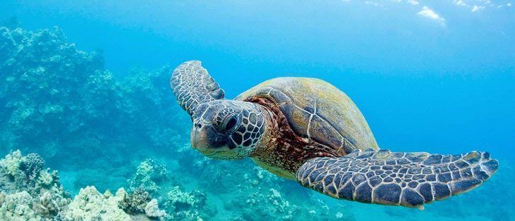 Turtle bay deals hawaii
