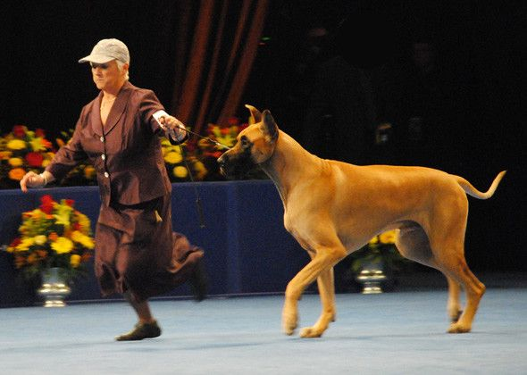 Marie Sommershoe with James, Great Dane National Dog Show 2012