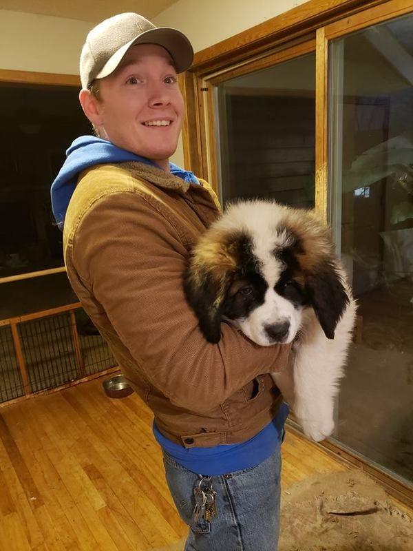 Cheap Saint Bernard Puppies For Sale St Bernard Puppy Puppy