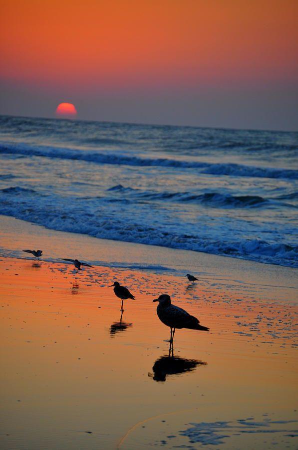 ✮ Sunrise Perch