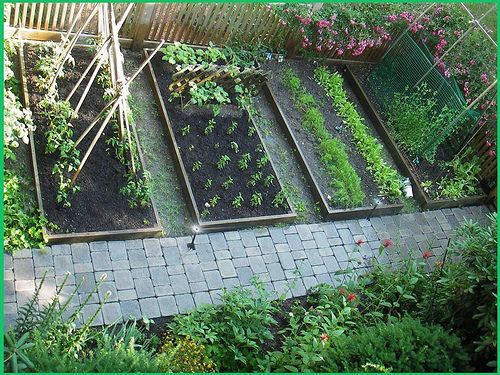 17 best images about vegetable garden fruit trees on - Vegetable garden planting guide zone 6 ...
