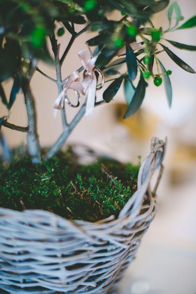 Amsicora - Porta fedi originale con bonsai ulivo - little olive tree for ring