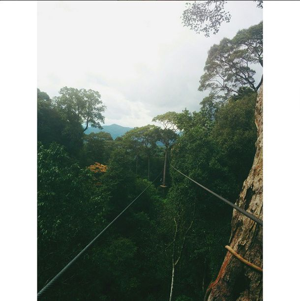 In #ChiangMai, Upaasna tried some dare-devil stuff. #Zip-lining through the dense #forest high above the ground, she had an amazing time doing it. Sounds like so much fun, the spectacular views and #thrilling ride!