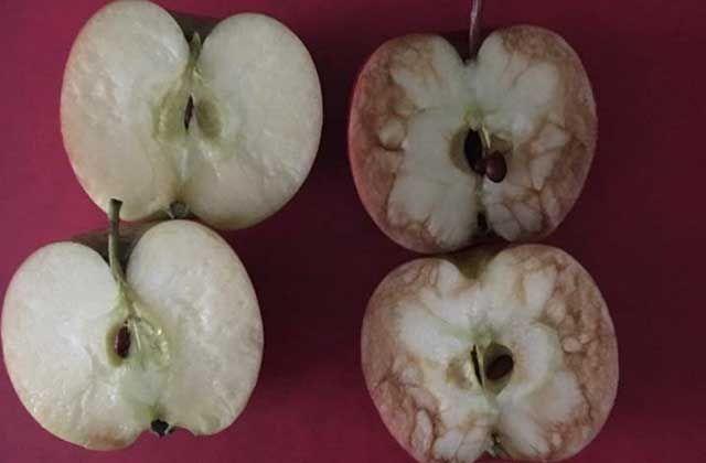 Une institutrice britannique a expliqué à ses élèves le harcèlement scolaire à l'aide de deux pommes. La méthode a été simple, mais très efficace.