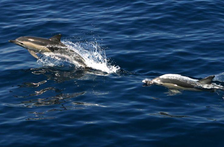 Национальный морской парк Алонисос
