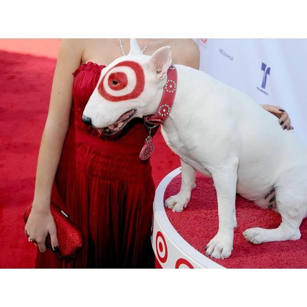 El pitbull es una raza de exposición canina. Para valorarlos, se miden parámetros como la línea de sangre.