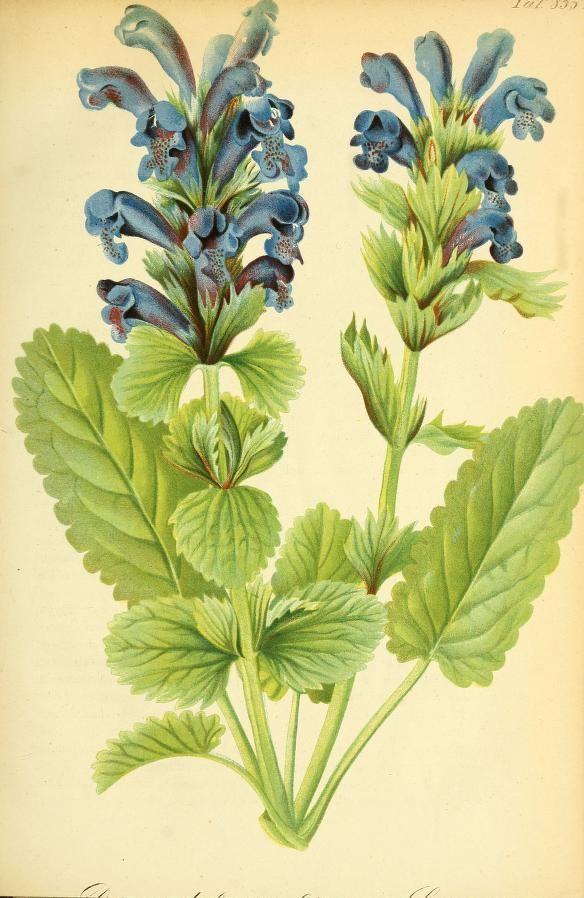 Elegant Gartenflora zeitschrift f r garten und blumenkunde Volume bd