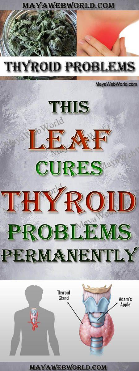 This Leaf Cures Thyroid Problems Permanently! – MayaWebWorld