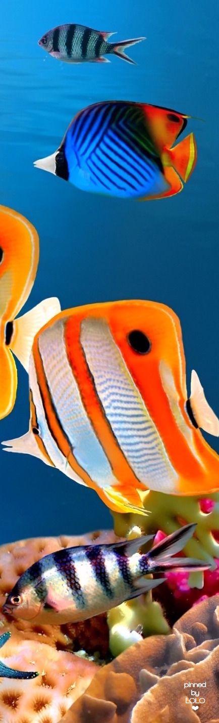 Tropical Fish | LOLO❤︎