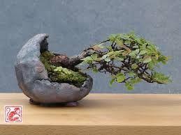 Resultado de imagem para interesting natural stone bonsai pot