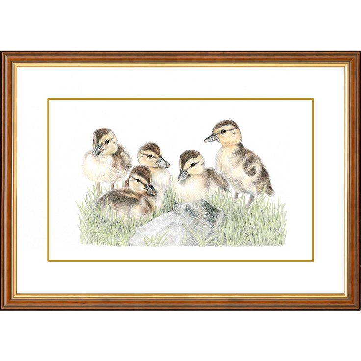 'Innocent Beginnings' - Ducklings #gifts #wildlife #painting #ducks