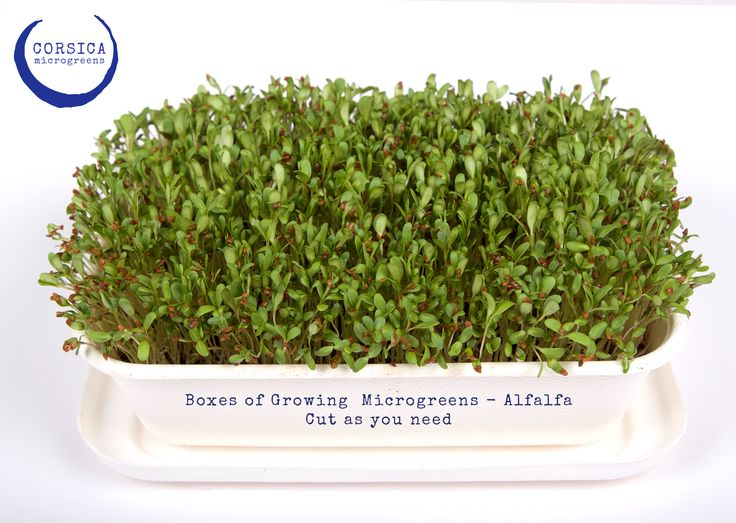 Microgreens: Cut as you need boxes from http://corsica.co.za/