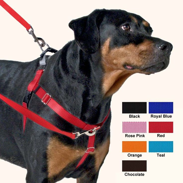 Freedom Harness, No Pull Dog Harness: Multi-Use, Velvet Lining!