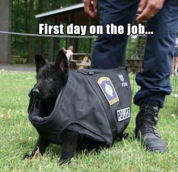 20 Service Dog Memes