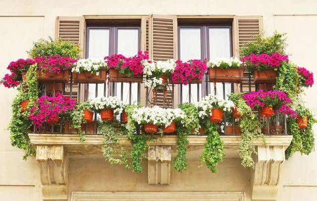 die besten 25 pflanzen f r s dbalkon ideen auf pinterest zimmerpflanzen pflege balkon. Black Bedroom Furniture Sets. Home Design Ideas