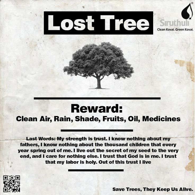 Trees are one of the best creations of God. Lets not lose them.  Save Trees , because they keep us alive. #TheyKeepUsAlive #SaveTrees