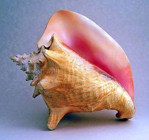 Resonancia de las conchas de Gastrópodos - Wikipedia, la enciclopedia libre