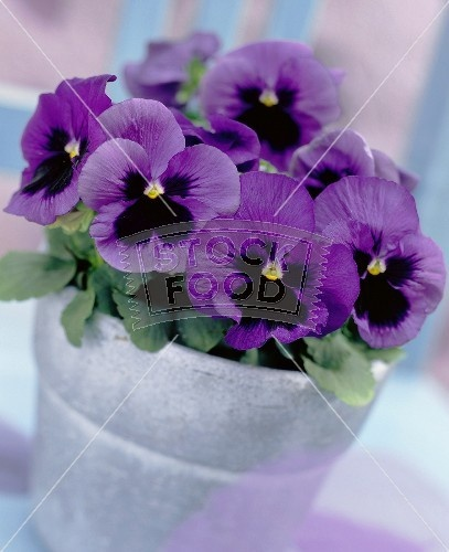purple pansies in galvanized pails would be pretty for the tables as well.