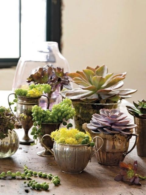 .succulents in vintage sugar bowls