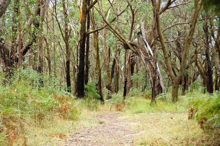Gorgeous Forest at Arthurs Lookout. Arthurs Seat State Park. www.lovethepen.com.au
