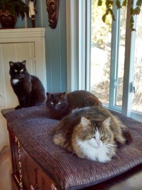 Trois beau chats et sont a moi
