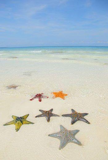 Nuestro primer destino de luna de miel del 2014 se encuentra en Zanzibar, Tanzania donde el mar es tan increíble como las estrellas de mar que viven en él!!