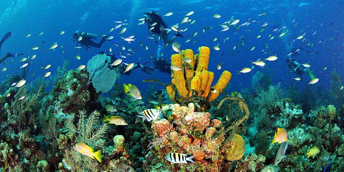 Ομάδα δυτών εξερευνούν τον βυθό -   Φωτογραφική μαγεία από τους βυθούς των ωκεανών