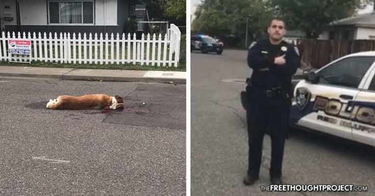 VIDEO: Cop Fires 16 Rounds at 'Non-Aggressive' Dogs, Kills One, Lets Other Suffer to Death