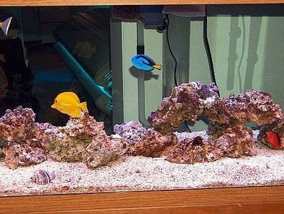 How to Set Up a Saltwater Aquarium  - Collecting up my prior pins here for re-casting on new boards.