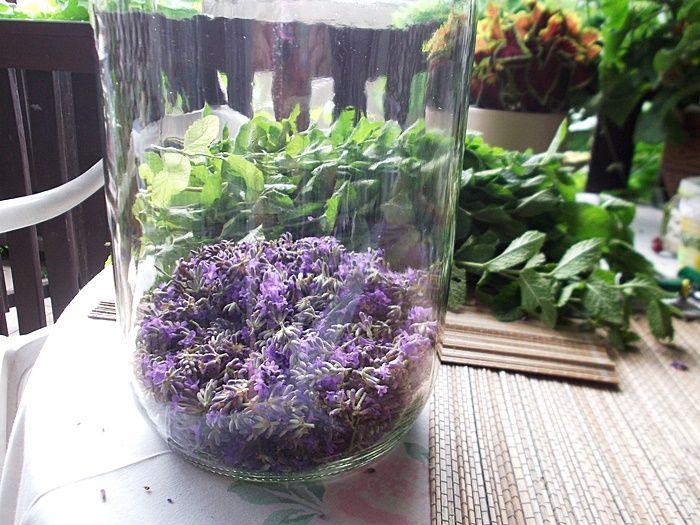 Nalewka z kwiatów lawendy   Szysia