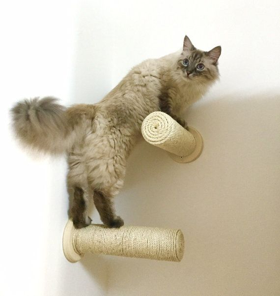 Oltre 25 fantastiche idee su tiragraffi per gatto su for Arredamento per gatti