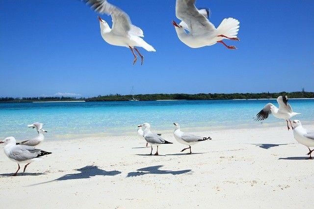 オーストラリアの東方、南太平洋に位置する「ニューカレドニア」という島をご存知ですか?あのユネスコ世界遺産に登録されたという、名誉あるクリアブルーのラグーンの持ち主でもある「ニューカレドニア」。今回はそんな、美しい海を誇る神秘の島について紹介したいと思います!
