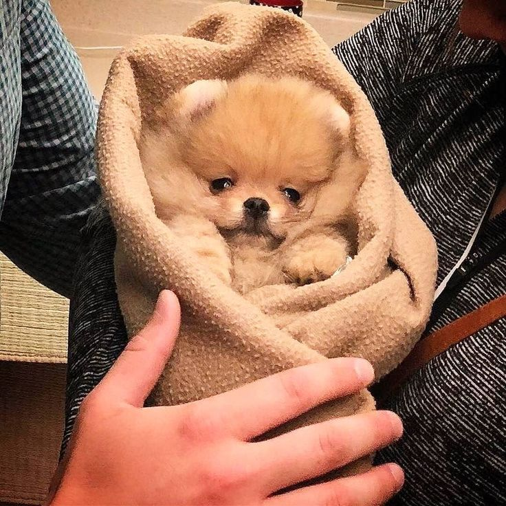 24 Cute Puppies That You Will Love With Images Cute Baby