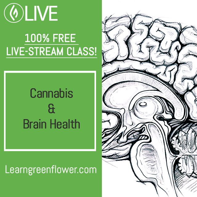 Register for my FREE livestreaming class on #Brain #Health & #Cannabis this Thursday via Green Flower Media. Link in bio.  #cannabiscommunity #mmj #thc #cbd #migraine #stroke #ptsd #memory #adhd #focus #attention #concentration #alzheimers #parkinsons #depression #anxiety #neuroscience #neuroscientist #research #medicine #neurology #free #education #class #webinar #IMPACTcannabis