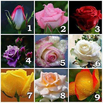 Trandafiri de Colectie - Comunitate - Google+