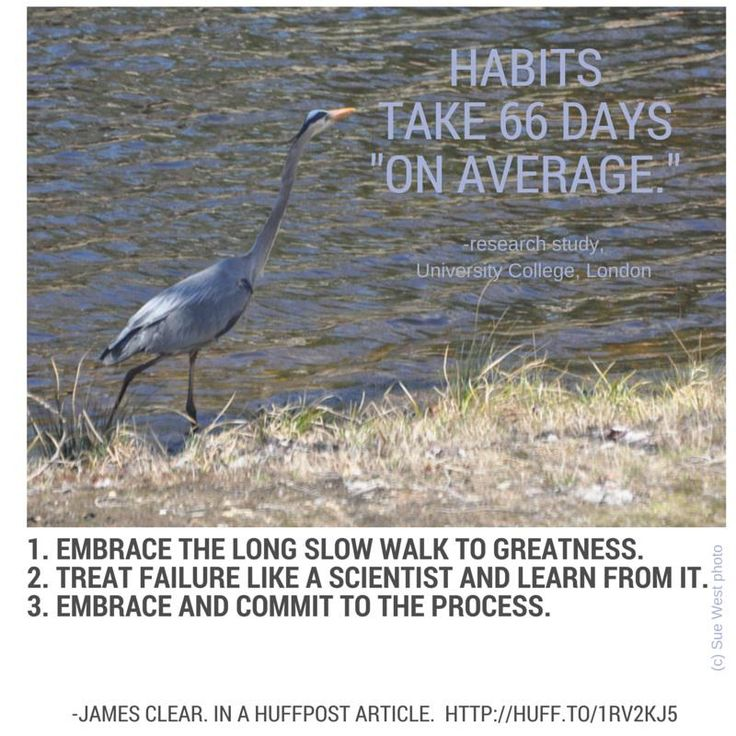 How Long It Takes To Form A New Habit (According To