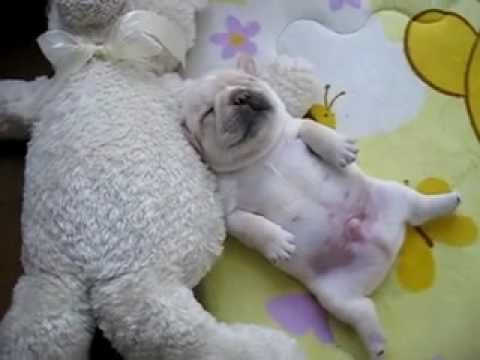 Warning: Puppy Belly Overload! | The Animal Rescue Site Blog#FdUvCoLxd9bkbGww.99