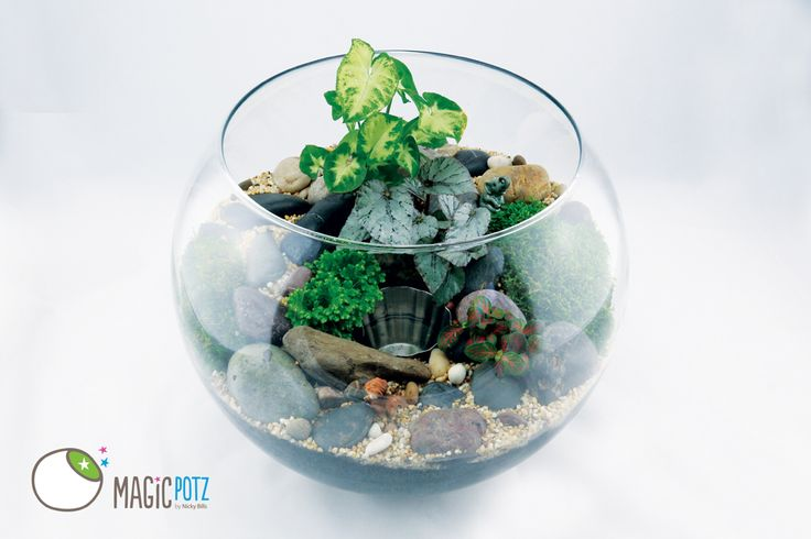A terrarium with a pond