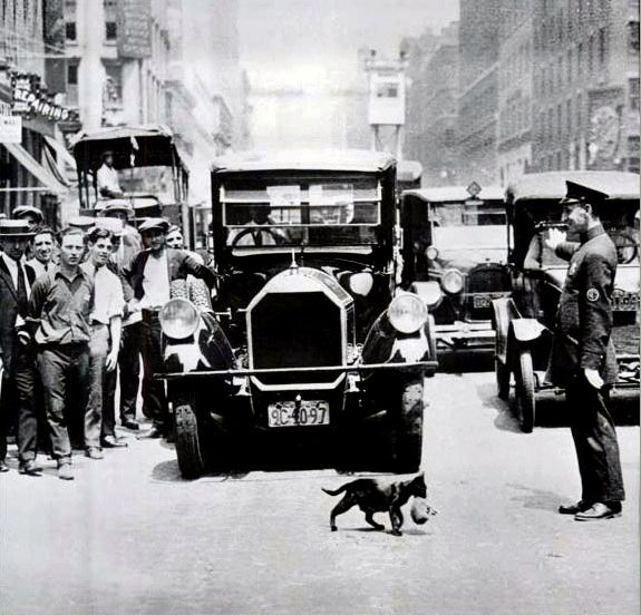 Traffic stops for a mother cat and the kitty in her mouth – New York, 1925...