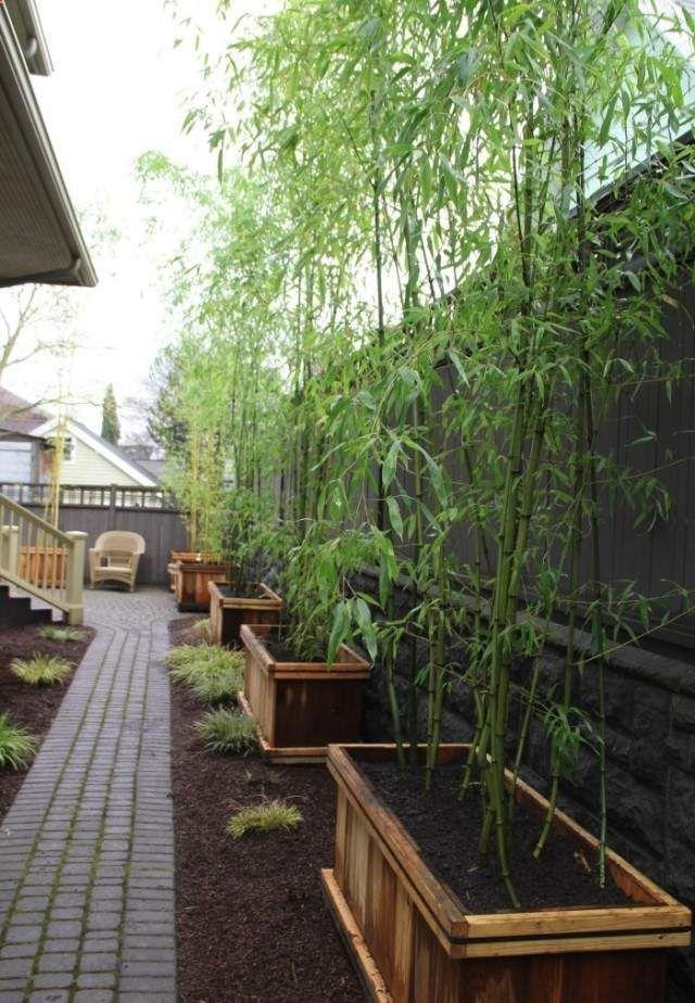 Plantes De Jardin Bambou Bacs Bois Rehausser Ligne Cloture Con