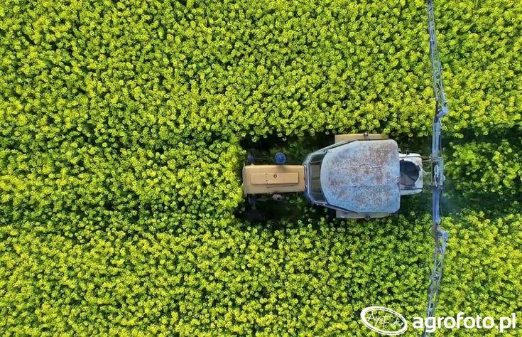 #pole #rolnictwo #rzepak #traktor #ciągnik
