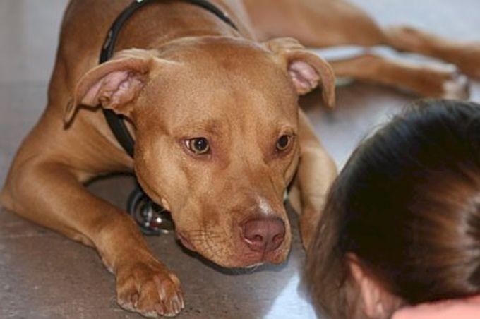 12 comportement de chiens décryptés pour vous aider à le comprendre !